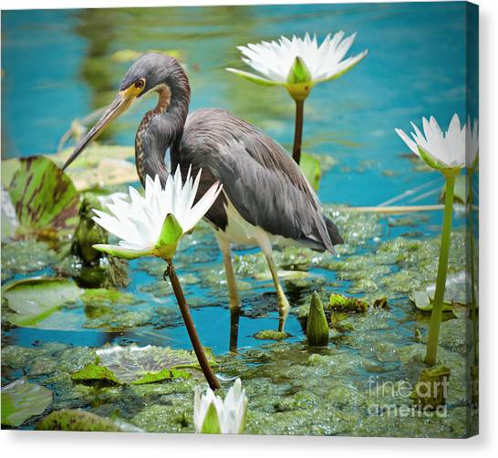 Heron With Water Lillies Canvas Print