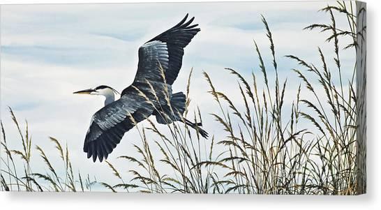 Herons Flight Canvas Print