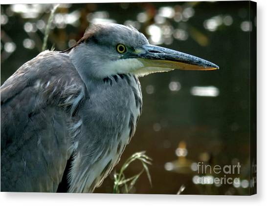 Herons Looking At You Kid Canvas Print