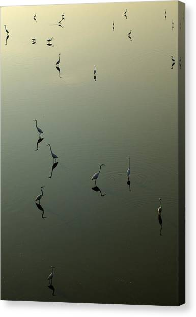 Herons On Lake 367 Canvas Print
