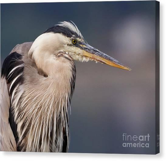 Herons Pause Canvas Print
