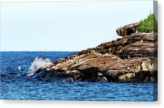 Herring Gull Picnic Canvas Print