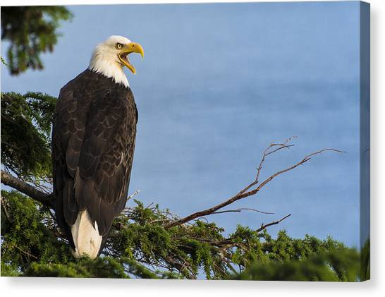 Canvas Print featuring the photograph Hey by Gary Lengyel