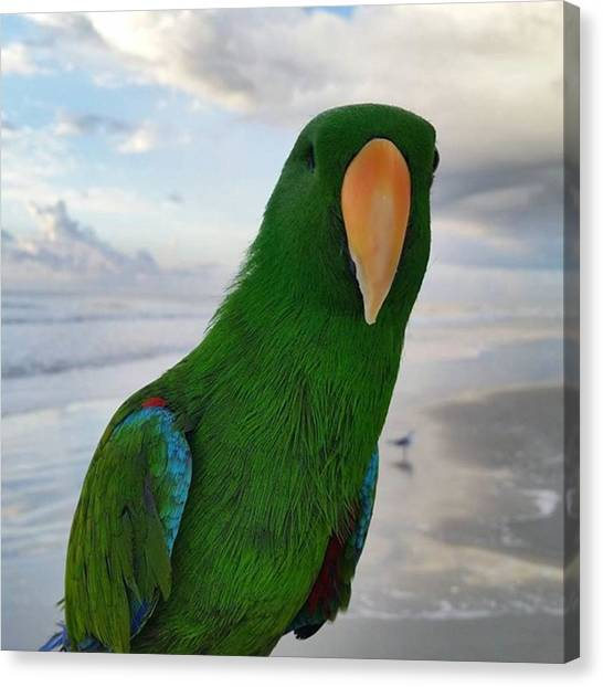 Parrots Canvas Print - Hey, Mr. Photo Bomb, You're In My Shot by Karen Breeze