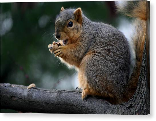 Hey  The Guy With Peanuts Canvas Print by Martin Morehead