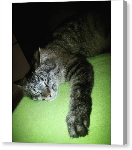 Independent Canvas Print - Hi My Friends.  Sorry, My Mommy And by Neo Maine Coon