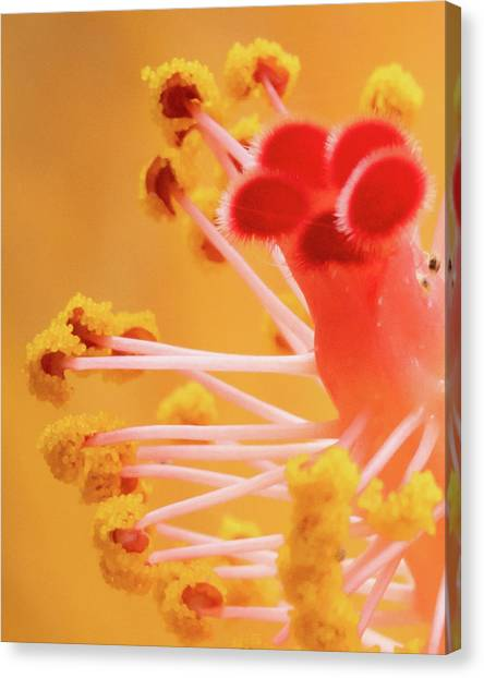 Canvas Print featuring the photograph Hibiscus-2 by David Coblitz