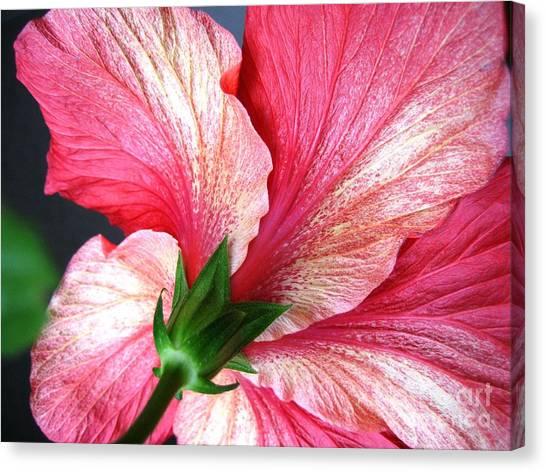 Hibiscus #5 Canvas Print