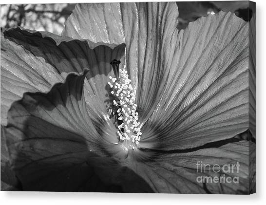 Canvas Print - Hibiscus Black And White by Megan Cohen