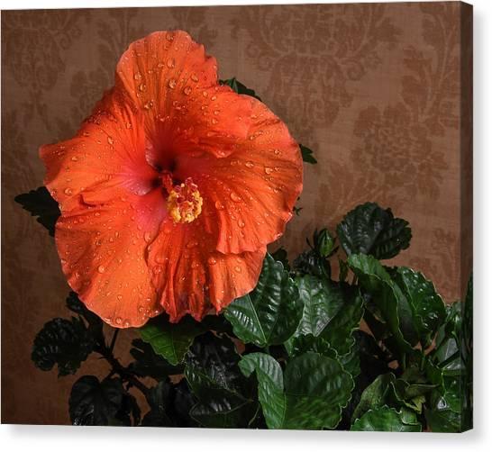 Hibiscus Fine Art Canvas Print