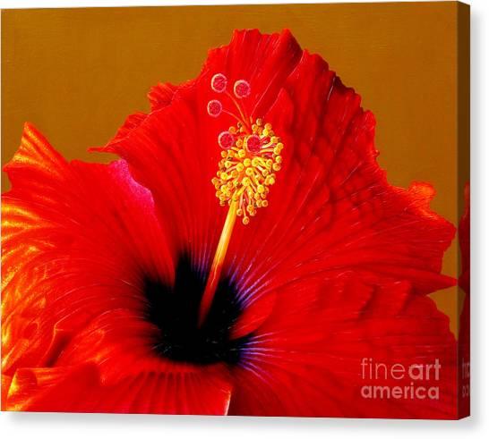 Hibiscus Canvas Print - Hibiscus by Jurek Zamoyski