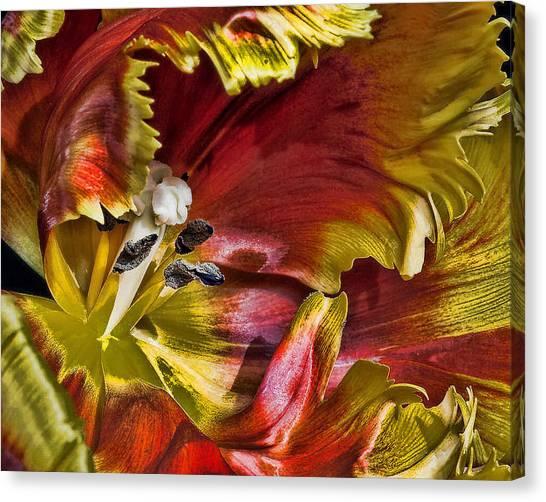 Hibiscus Spice Canvas Print