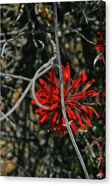 Red Camo Canvas Print - Hidden Beauty by Abra Blue