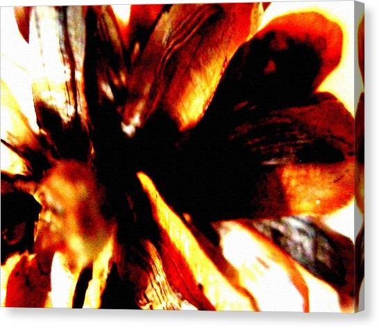 Hidden Image In Abstract Pinecone Canvas Print