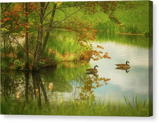 Hidden In Spring Canvas Print