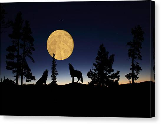 Hidden Wolves Canvas Print