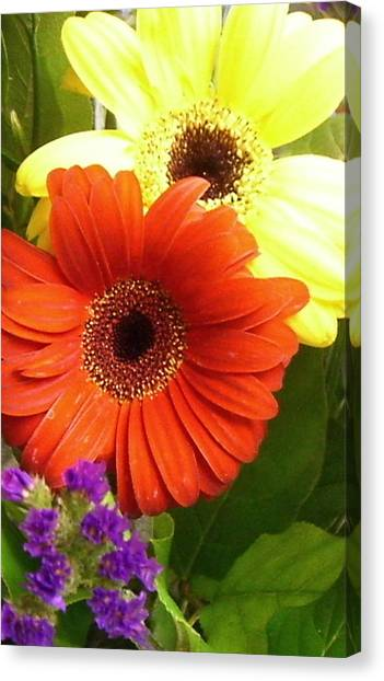 Hide And Seek Canvas Print by Kimberly Morin