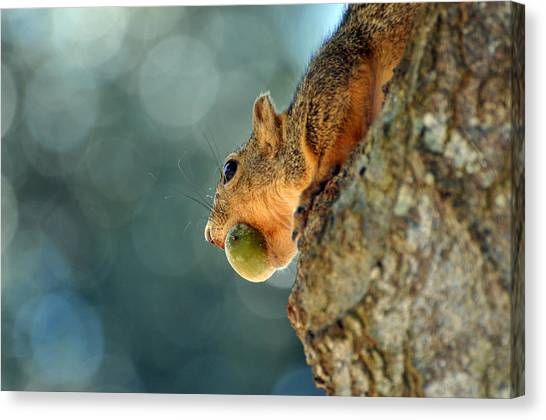 Hiding Dinner Canvas Print by Teresa Blanton