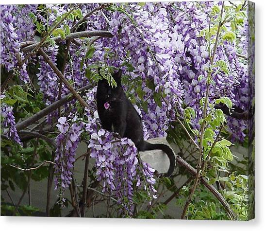 Hiding In The Wisteria Canvas Print by Carole Boyd