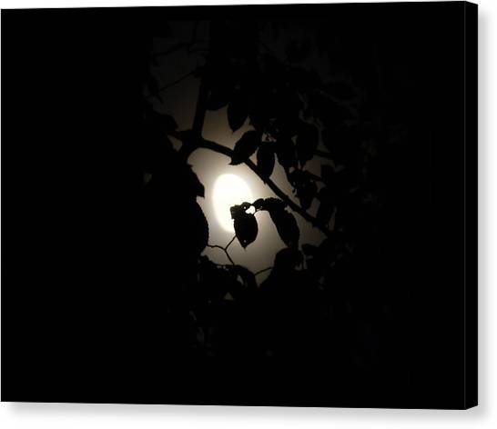 Canvas Print featuring the photograph Hiding - Leaves Over Moon by Menega Sabidussi