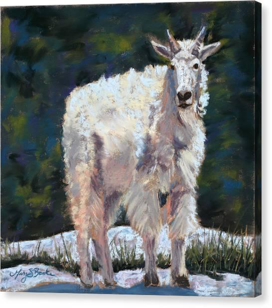 High Country Friend Canvas Print