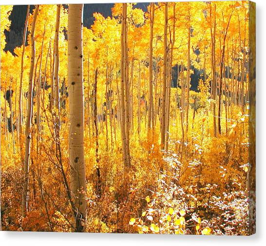 High Country Gold Canvas Print