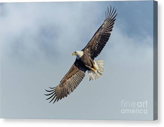 Canvas Print featuring the photograph High Flight by Craig Leaper
