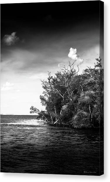 Mangrove Trees Canvas Print - High Tide by Marvin Spates