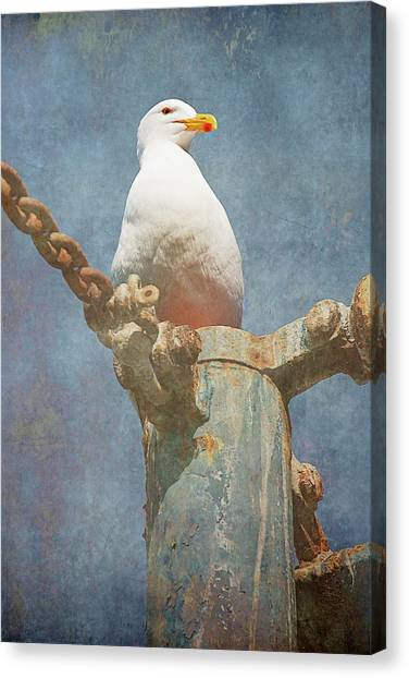 High-up On The Watchtower , Seagull Canvas Print