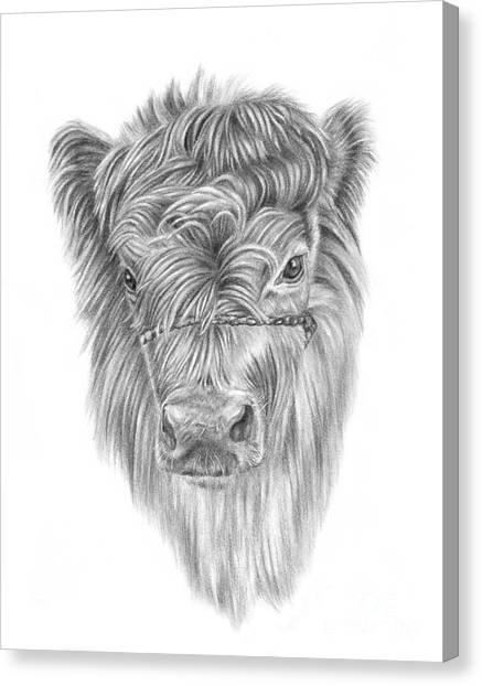 Highland Calf Canvas Print