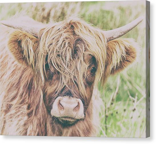 Yak Canvas Print - Highland Cattle by Martin Newman