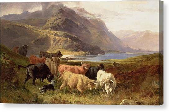 Collie Canvas Print - Highland Cattle With A Collie by Joseph Adam