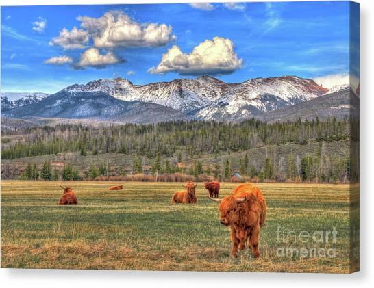 Yaks Canvas Print - Highland Colorado by Scott Mahon