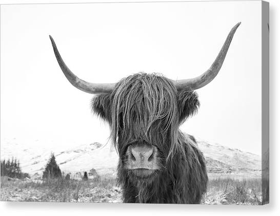 Highland Cow Mono Canvas Print