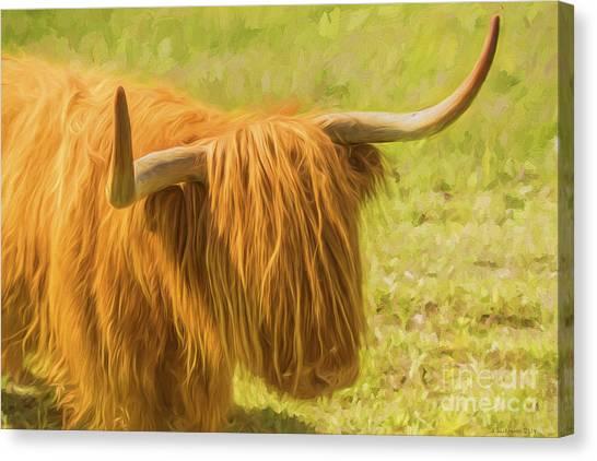 Cow Farms Canvas Print - Highland Cow by Veikko Suikkanen