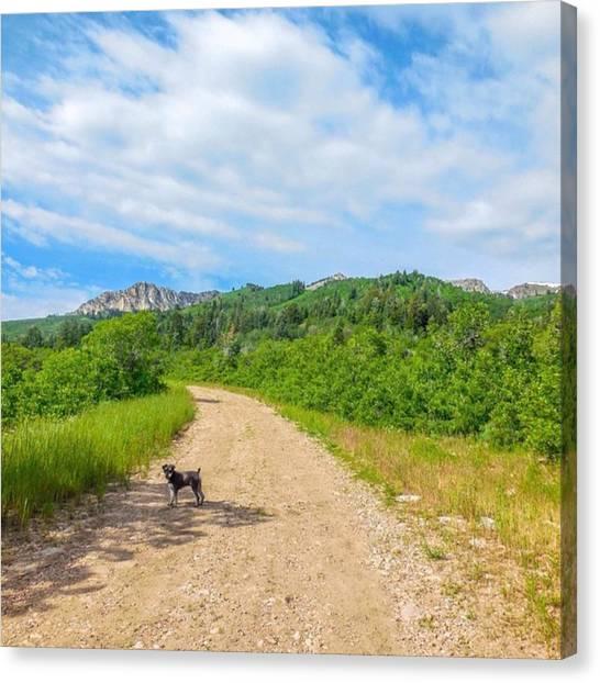 Schnauzers Canvas Print - #hike #hiking #dog #indieogden #ogden by Melissa Helmbrecht