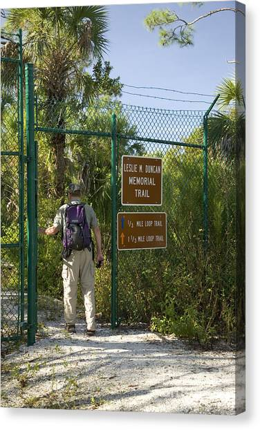 Florida Panthers Canvas Print - Hiker Enters Panther Refuge by Inga Spence