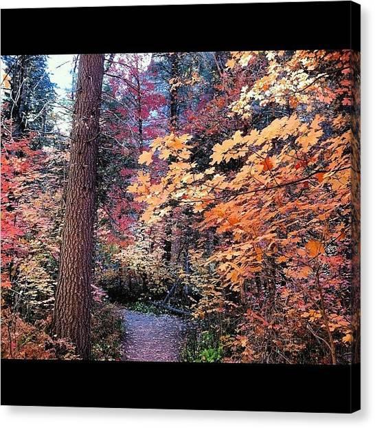 Arizona Canvas Print - #hiking #light #arizona #sedona #leaves by Artistic Shutter