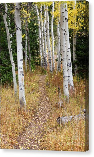Great Falls Of Yellowstone Canvas Print - Hiking Trail In Autumn Aspens by Mike Cavaroc