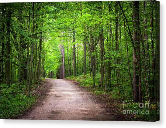 Canvas Print featuring the photograph Hiking Trail In Green Forest by Elena Elisseeva