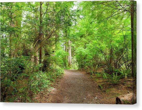 Canvas Print - Hiking Trail Through Forest Along Lewis And Clark River by David Gn