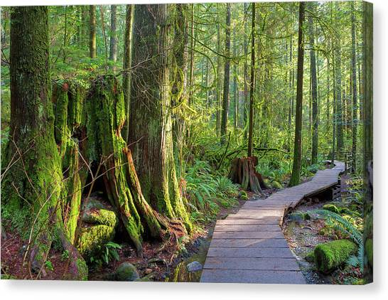 Canvas Print - Hiking Trail Through Forest In Lynn Canyon Park by David Gn