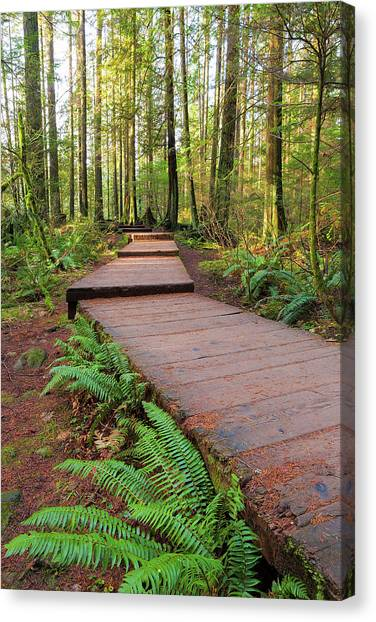 Canvas Print - Hiking Trail Wood Walkway In Lynn Canyon Park by David Gn