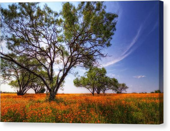 Hill Country Spring Canvas Print