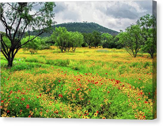 Austin Texas Canvas Print - Hill Country Wildflowers by Lynn Bauer