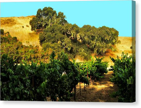 hill side vineyard 'n Oaks Canvas Print