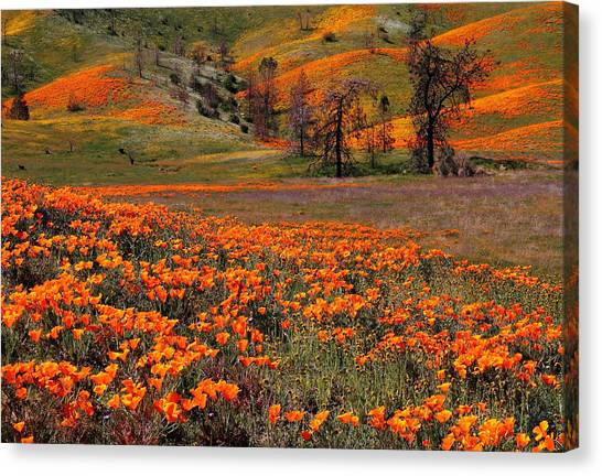 Hills Of Orange Near Antelope Valley Poppy Preserve In California Canvas Print