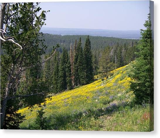 Hillside Wildflowers Canvas Print