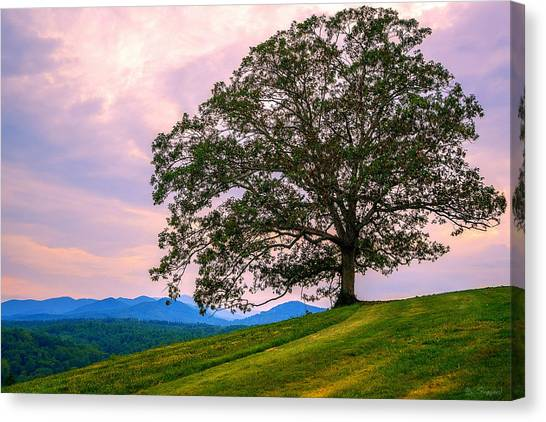 Hilltop Oak Canvas Print