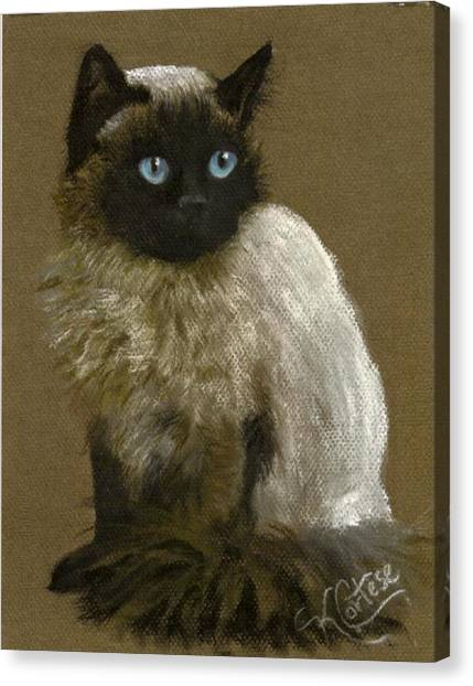 Himalayan Cats Canvas Print - Himalayan Cat Pet Portrait by Karen Cortese